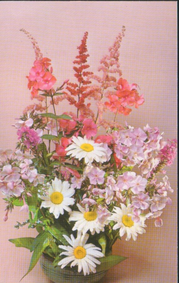 """Apsveikuma pastkarte """"Ziedi"""" Pusķis ar kumelītēm un floksiem 1983. gada """"Planeta"""" 9x14 cm"""