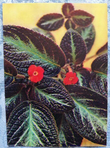 "Houseplants ""Episcia cupreata"" 1983 postcard 10.5x15 cm Photo by R. Voronov"