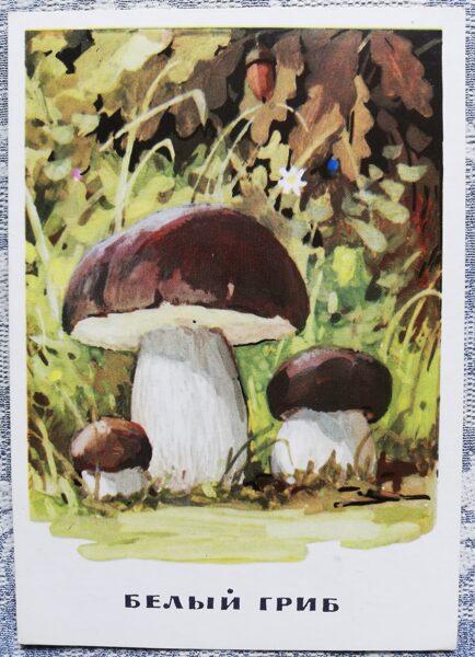 """""""Egļu baravika"""" pastkaršu sērija """"Sēnes"""" 1971. gads 10,5x15 cm"""