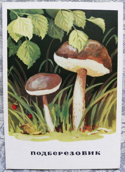 """""""Parastā bērzubeka"""" pastkaršu sērija """"Sēnes"""" 1971. gads 10,5x15 cm"""