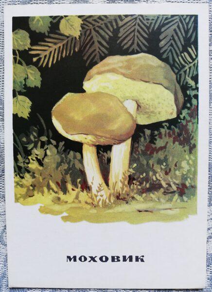 """""""Samtbeka"""" pastkaršu sērija """"Sēnes"""" 1971 10,5x15 cm"""