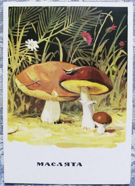 """""""Sviestbekas"""" pastkaršu sērija """"Sēnes"""" 1971 10,5x15 cm"""
