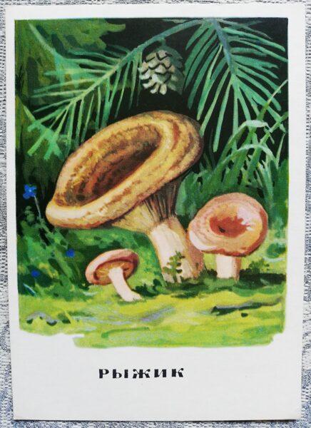 """""""Priežu rudmiese"""" pastkaršu sērija """"Sēnes"""" 1971 10,5x15 cm"""