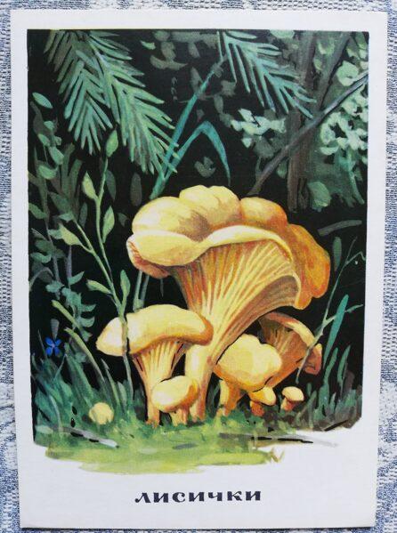 """""""Gailenes"""" pastkaršu sērija """"Sēnes"""" 1971 10,5x15 cm"""