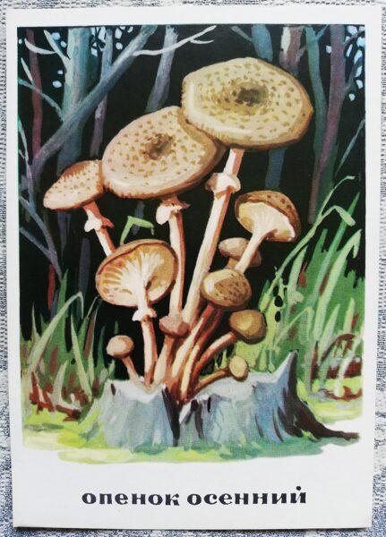 """""""Celmenes"""" pastkaršu sērija """"Sēnes"""" 1971 10,5x15 cm"""