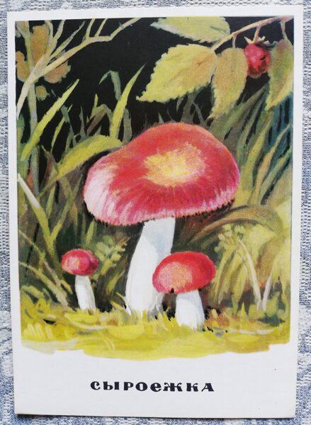"""""""Bērzlape"""" pastkaršu sērija """"Sēnes"""" 1971 10,5x15 cm"""