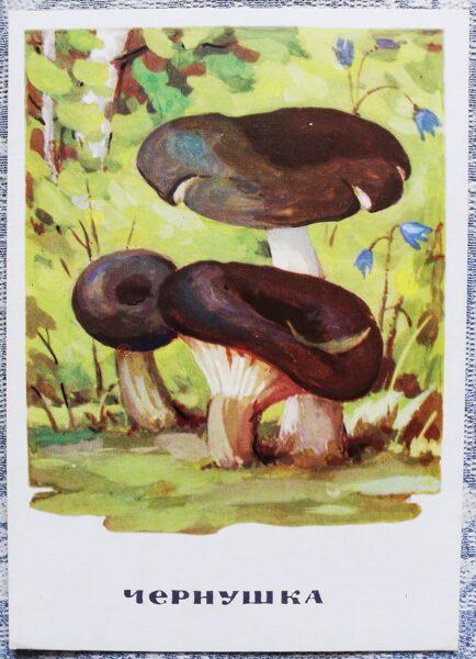 """Cūcene"" pastkaršu sērija ""Sēnes"" 1971 10,5x15 cm"