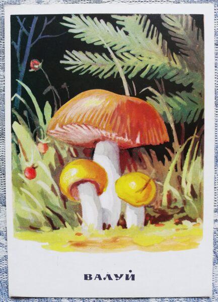 """""""Bērzlapju dzimta"""" pastkaršu sērija """"Sēnes"""" 1971 10,5x15 cm"""