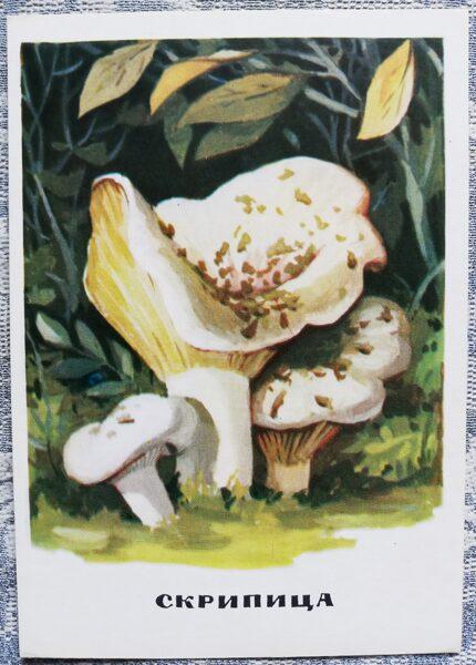 """""""Bērzlapju dzimta"""" pastkaršu sērija """"Sēnes"""" 1971. gads 10,5x15 cm"""