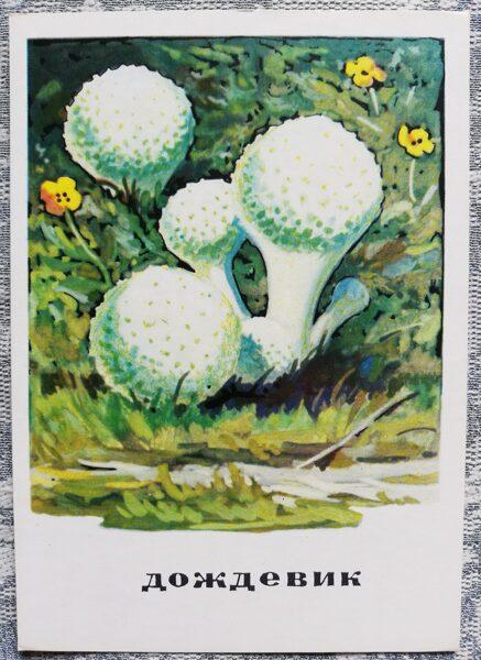"""""""Atmateņu dzimta"""" pastkaršu sērija """"Sēnes"""" 1971 10,5x15 cm"""