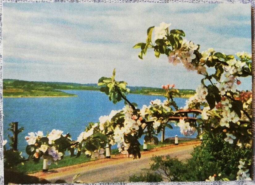 Ogre 1966 Daugava near Ogre 14x10 cm postcard