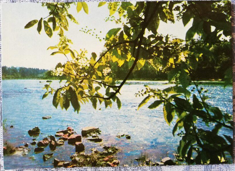 Ogre 1966 Ogre River in spring 14x10 cm postcard