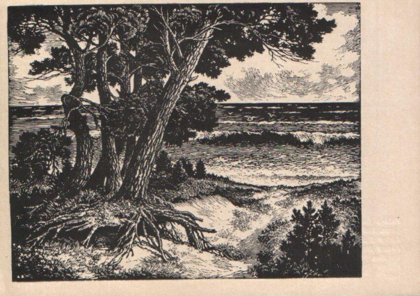 "Arturs Duburs ""Pines by the Sea"" 1970 art postcard 14x10 cm"
