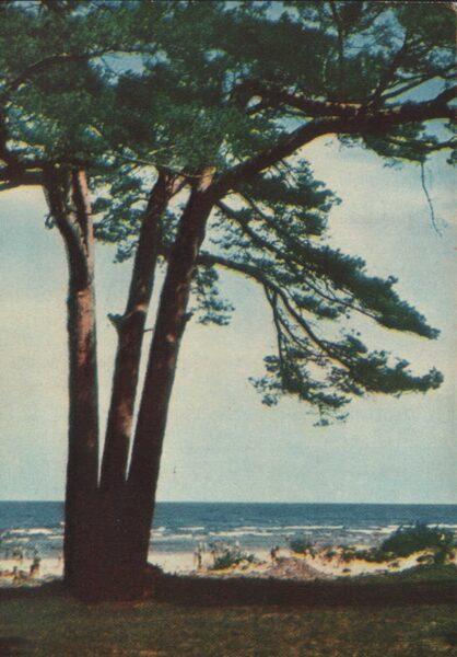 Jūrmala 1965. gads Pie jūras. 10x14 cm.
