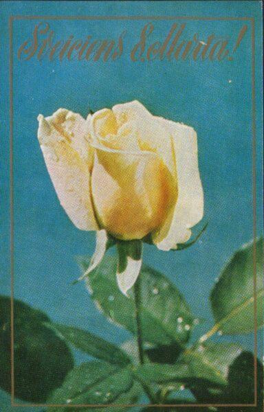"""Apsveikuma pastkarte """"Sveiciens 8. martā"""" Baltā roze 1981. gada """"Liesma"""" 9x14 cm"""